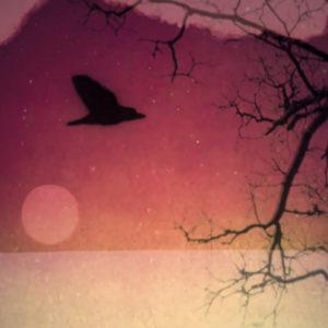 Faulkner Songs de Forêt
